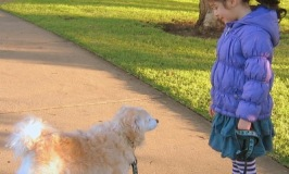 Why Dogs Bite Children – Learn How To Keep Your Kids Safe Around Dogs