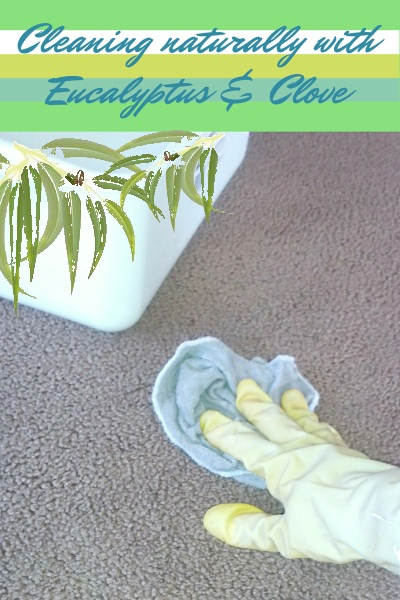 Cleaning Tips using Eucalyptus and Clove Essential Oil