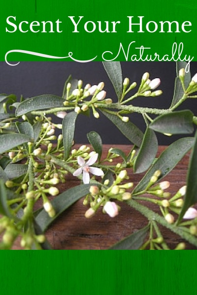Scent Your Home Naturally and Safely