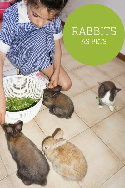 Are Your Kids Old Enough To Have A Pet Rabbit?