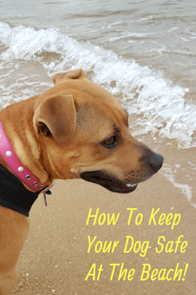 Important Dog Safety Tips At The Beach