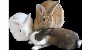 Animal and Ethical Australian Charities