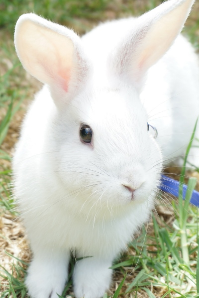 Why Rabbits Are Not Suitable Pets For Very Young Children