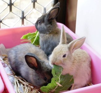 Rabbits as pets for you