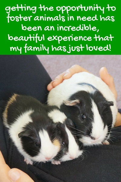 The Benefits of Fostering Animals