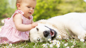organic pet care directory