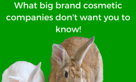 what cosmetic companies are doing to animals