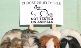 Choosing Cruelty Free Cosmetics